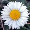 RoozGozar.com | آیکن فانتزی گل و طبیعت