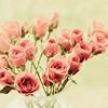 تصاویر زیباسازی|www.RoozGozar.com|تصاویر زیباسازی